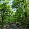 アルプスに向かう林道