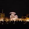 不二桜と東寺