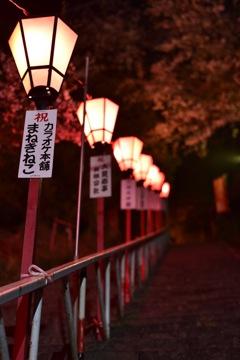夜桜撃沈の為…2