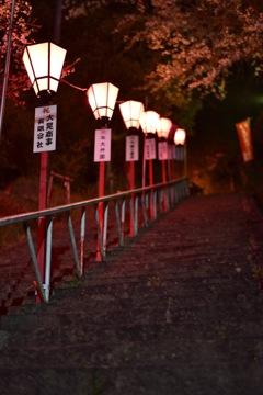 夜桜撃沈の為…1