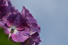 空と紫陽花