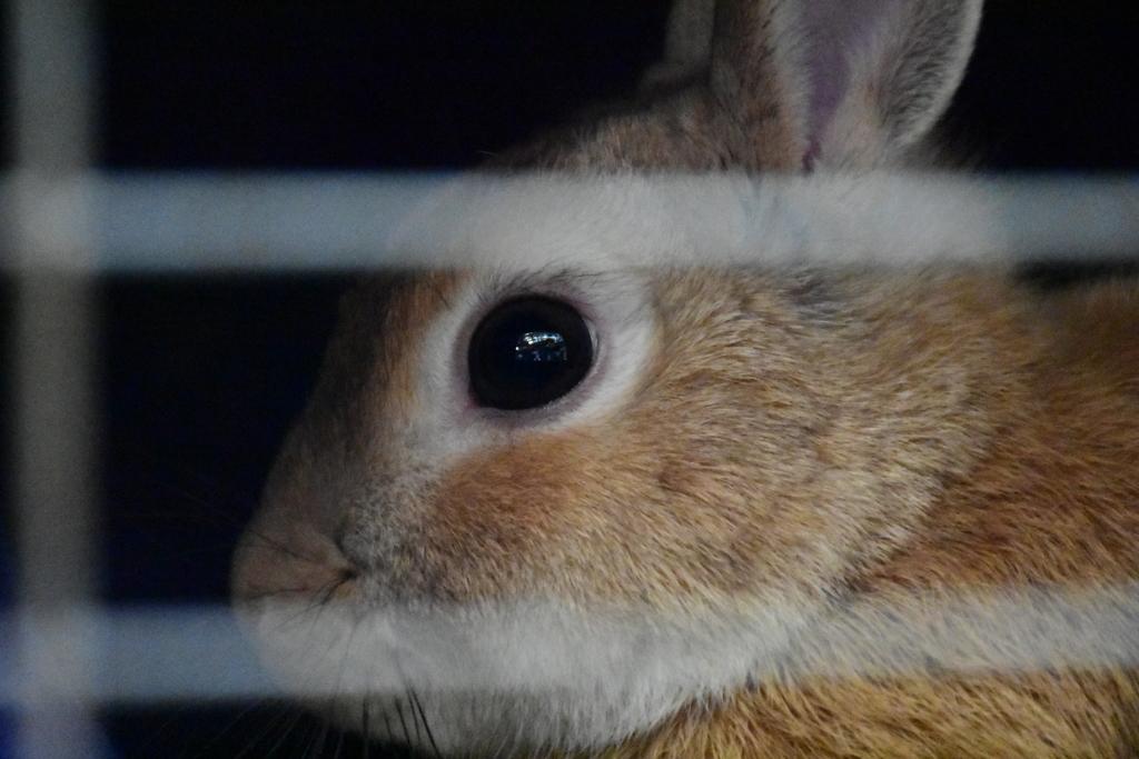 檻からこっちを見つめる兎