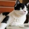 扇風機の番猫