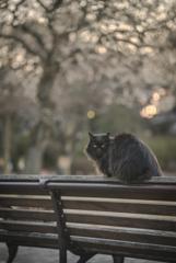 朝のベンチ