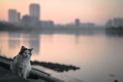 早朝の川のほとりで