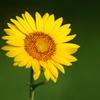 太陽パワーを吸収っ!!