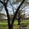 ベンチと木