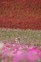 秋色の丘へ