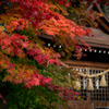 飛騨高山の紅葉