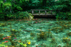モネの池2021