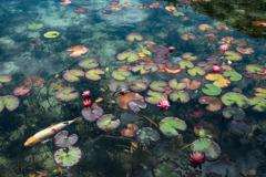 モネの池 2020