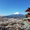 富士山 桜 五重塔 新倉山浅間公園