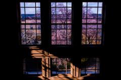 窓越しのしだれ桜