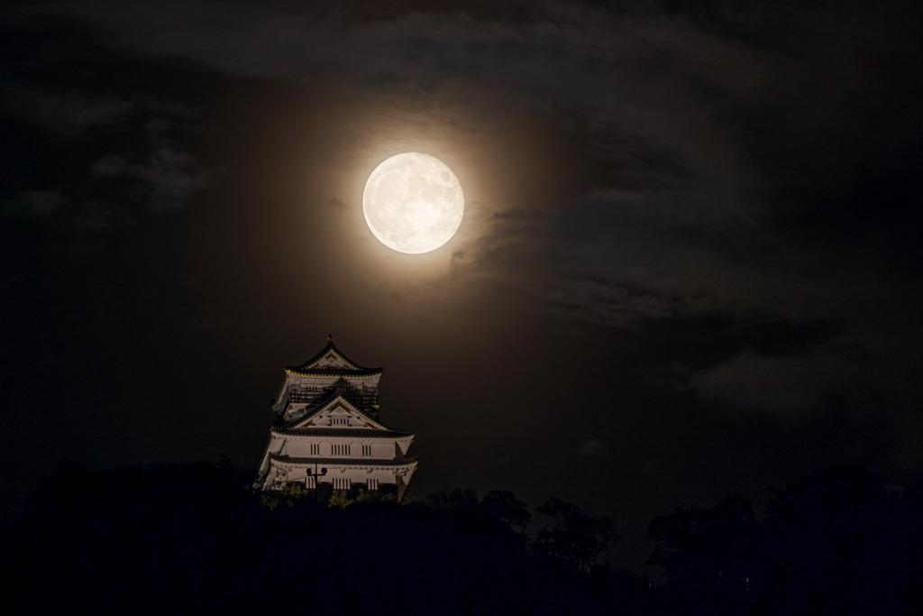 月灯りに照らされて