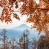 秋の終わりに色どる