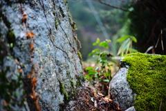 庭の石と苔