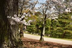 衆楽園と桜