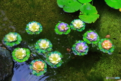 鎌倉 長谷寺 かわいい蓮の花