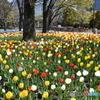 ようやく澄み光り輝く天気となり@日比谷公園、でも強風で… ④