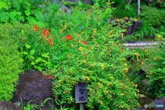 鎌倉 長谷寺 赤い花