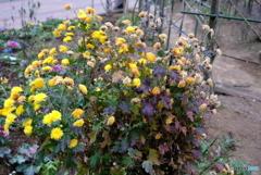 寒い冬の曇り空のもとでの花