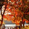 中禅寺湖 湖畔の紅葉 ボート乗りば近くにて