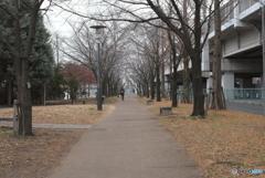 寒い冬の曇り空での街路