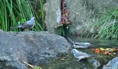 鳥たちの水場