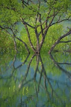 水没林…。