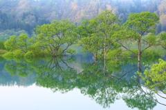木と…樹と…季…。