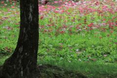 対岸の花園III