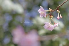 春のパレット