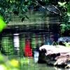 池の中の人物
