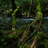 森の景色3