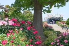 横浜 Rose Week-255