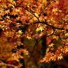 岡田美術館庭園-078