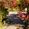 箱根湿生花園-211