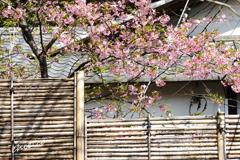 北鎌倉-345