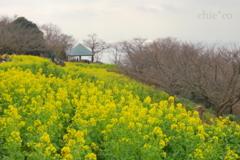 吾妻山公園-204