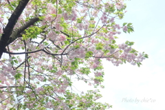 石川町~イタリア山庭園-194