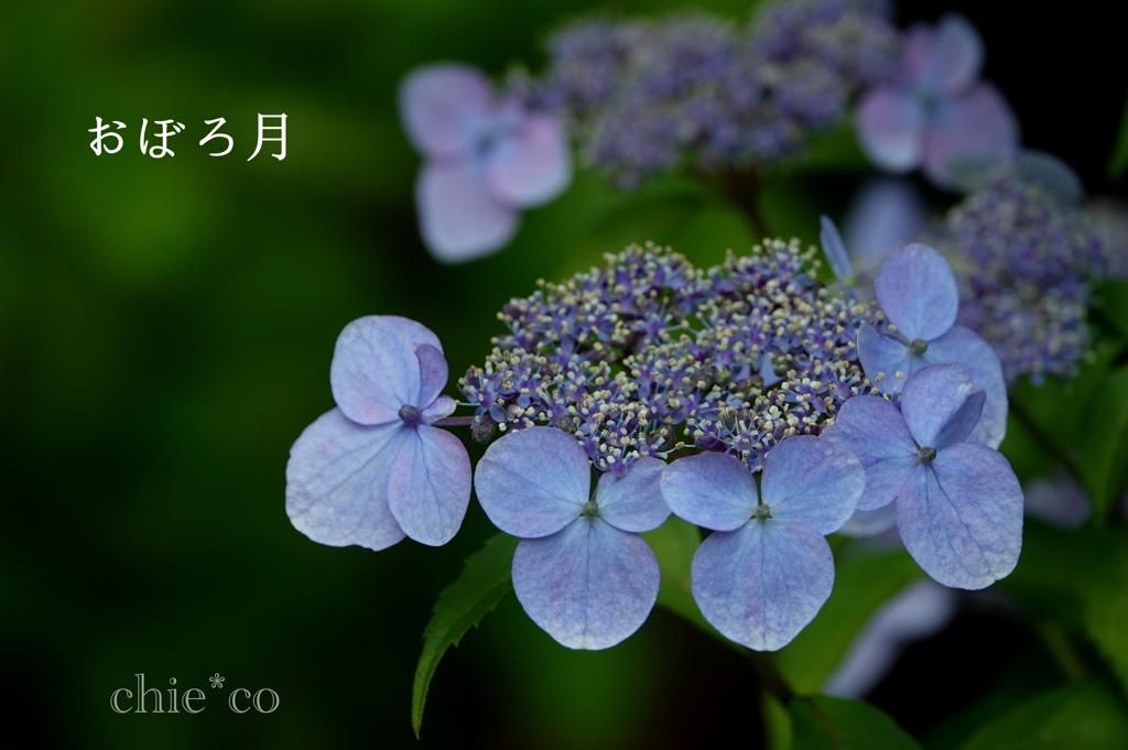 瀬戸神社-291