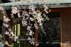 鎌倉-461