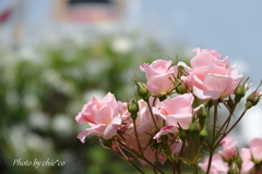 横浜 Rose Week-269