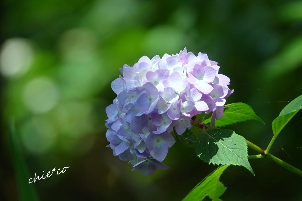 久良岐公園-248