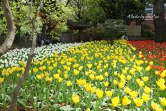 横浜公園-312