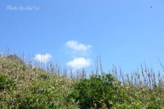 ソレイユの丘-287