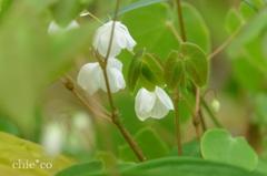 箱根湿生花園-256
