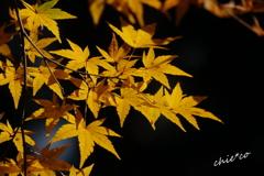 北鎌倉-341