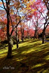 箱根美術館-146