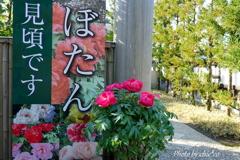 鎌倉-361